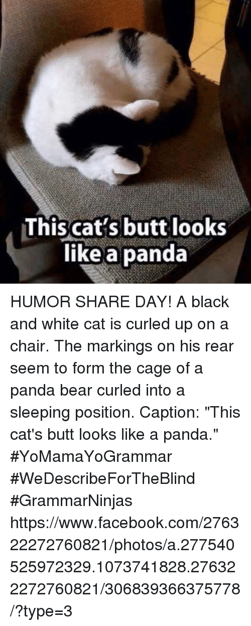 25 Best Memes About Panda And Facebook Panda And