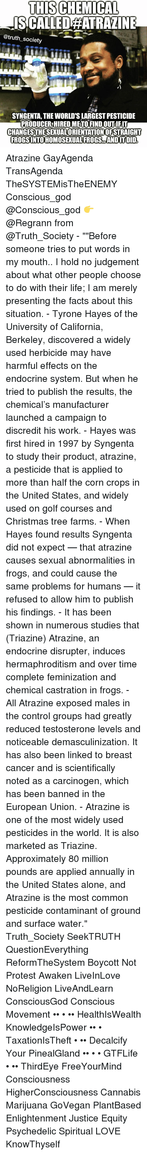 """syngenta: THIS CHEMICAL  ISACALLEDAHATRAZINE  @truth society  SYNGENTA, THE WORLDTSLARGEST PESTICIDE  PRODUCER HIRED METO FINDOUTIFIT  CHANGESTHESEXUALORIENTATIONOFSTRAIGHT  FROGSINTOHOMOSEXUALFROGS AND ITDID. Atrazine GayAgenda TransAgenda TheSYSTEMisTheENEMY Conscious_god @Conscious_god 👉 @Regrann from @Truth_Society - """"""""Before someone tries to put words in my mouth.. I hold no judgement about what other people choose to do with their life; I am merely presenting the facts about this situation. - Tyrone Hayes of the University of California, Berkeley, discovered a widely used herbicide may have harmful effects on the endocrine system. But when he tried to publish the results, the chemical's manufacturer launched a campaign to discredit his work. - Hayes was first hired in 1997 by Syngenta to study their product, atrazine, a pesticide that is applied to more than half the corn crops in the United States, and widely used on golf courses and Christmas tree farms. - When Hayes found results Syngenta did not expect — that atrazine causes sexual abnormalities in frogs, and could cause the same problems for humans — it refused to allow him to publish his findings. - It has been shown in numerous studies that (Triazine) Atrazine, an endocrine disrupter, induces hermaphroditism and over time complete feminization and chemical castration in frogs. - All Atrazine exposed males in the control groups had greatly reduced testosterone levels and noticeable demasculinization. It has also been linked to breast cancer and is scientifically noted as a carcinogen, which has been banned in the European Union. - Atrazine is one of the most widely used pesticides in the world. It is also marketed as Triazine. Approximately 80 million pounds are applied annually in the United States alone, and Atrazine is the most common pesticide contaminant of ground and surface water."""" Truth_Society SeekTRUTH QuestionEverything ReformTheSystem Boycott Not Protest Awaken LiveInLove NoReligion LiveAndLe"""