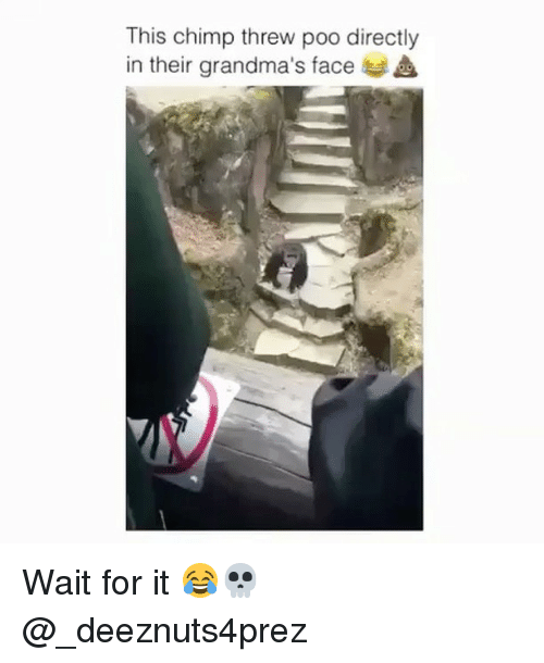 Chimp: This chimp threw poo directly  in their grandma's face  A Wait for it 😂💀 @_deeznuts4prez