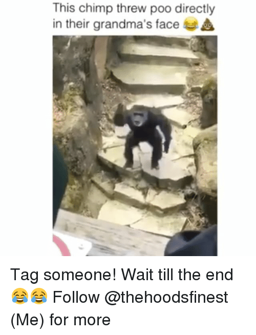 Chimp: This chimp threw poo directly  in their grandma's face Tag someone! Wait till the end 😂😂 Follow @thehoodsfinest (Me) for more