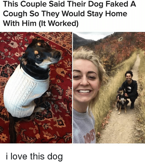 Love, Memes, and Home: This Couple Said Their Dog Faked A  Cough So They Would Stay Home  With Him (It Worked) i love this dog