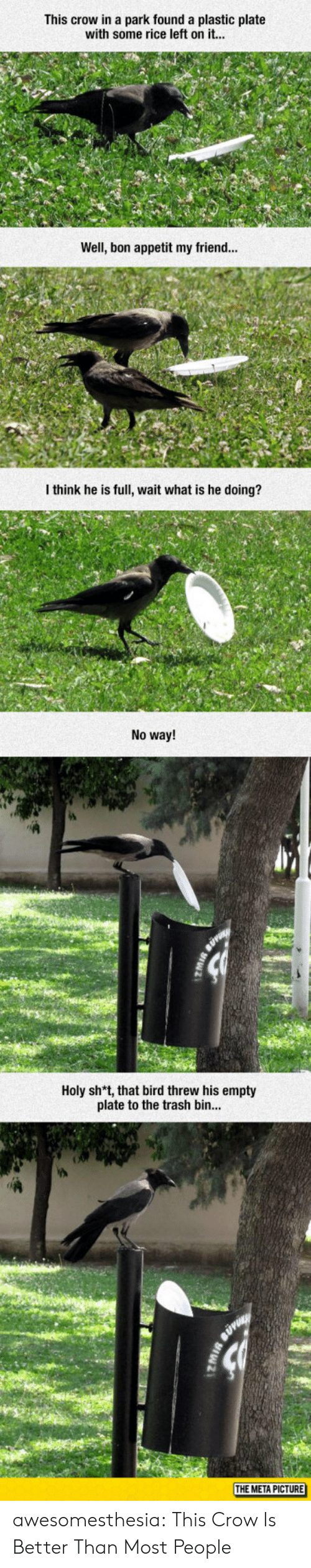 Sh T: This crow in a park found a plastic plate  with some rice left on it...  Well, bon appetit my friend...  I think he is full, wait what is he doing?  No way!  Holy sh*t, that bird threw his empty  plate to the trash bin  THE META PICTURE awesomesthesia:  This Crow Is Better Than Most People