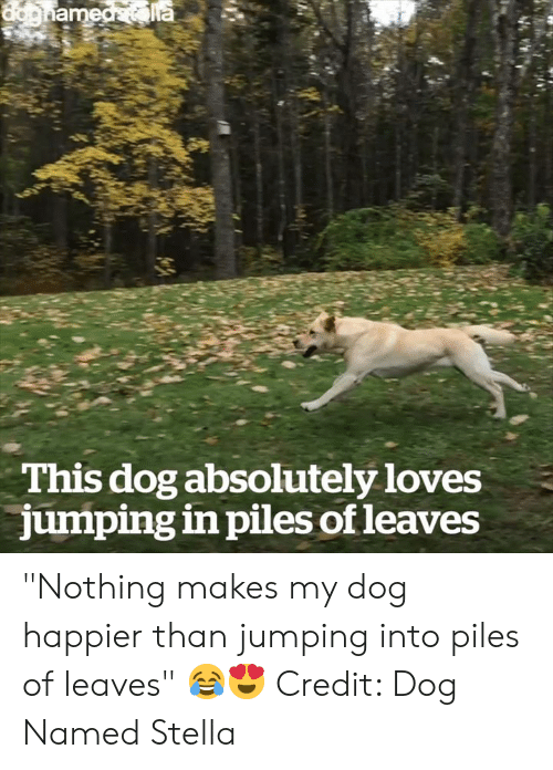 """stella: This dog absolutely loves  jumping in piles of leaves """"Nothing makes my dog happier than jumping into piles of leaves"""" 😂😍  Credit: Dog Named Stella"""