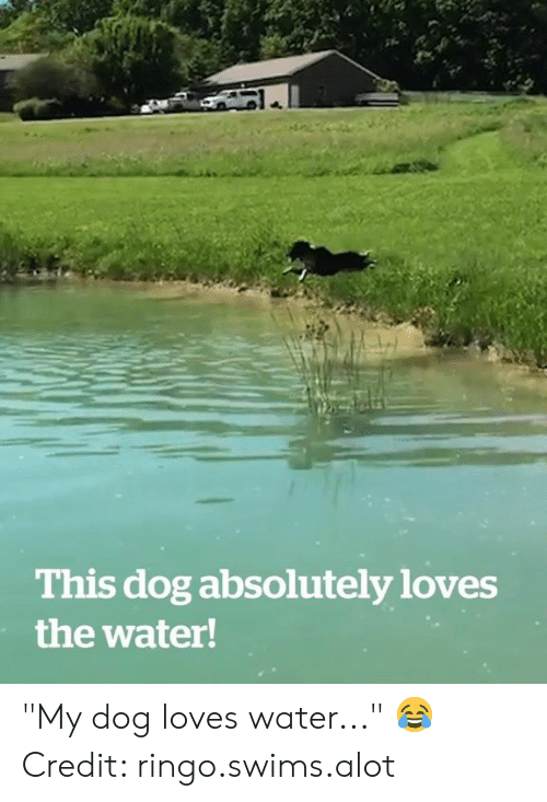 "alot: This dog absolutely loves  the water! ""My dog loves water..."" 😂  Credit: ringo.swims.alot"