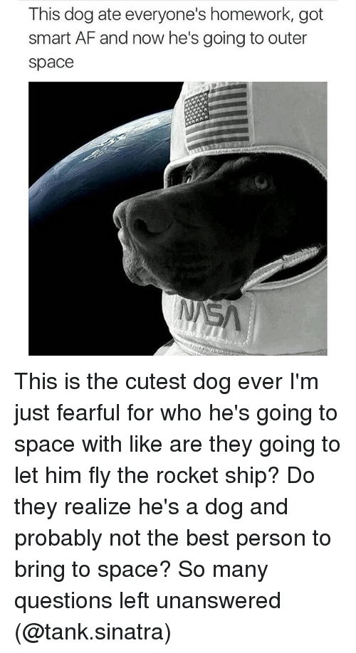 Af, Dogs, and Funny: This dog ate everyone's homework, got  smart AF and now he's going to outer  space This is the cutest dog ever I'm just fearful for who he's going to space with like are they going to let him fly the rocket ship? Do they realize he's a dog and probably not the best person to bring to space? So many questions left unanswered (@tank.sinatra)