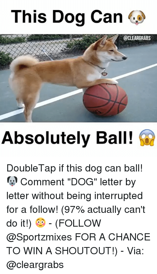 "Memes, 🤖, and It Follows: This Dog Can  @CLEARGRABS  Absolutely Ball! DoubleTap if this dog can ball! 🐶 Comment ""DOG"" letter by letter without being interrupted for a follow! (97% actually can't do it!) 😳 - (FOLLOW @Sportzmixes FOR A CHANCE TO WIN A SHOUTOUT!) - Via: @cleargrabs"