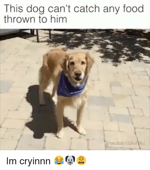 Video Dog Cant Catch Food
