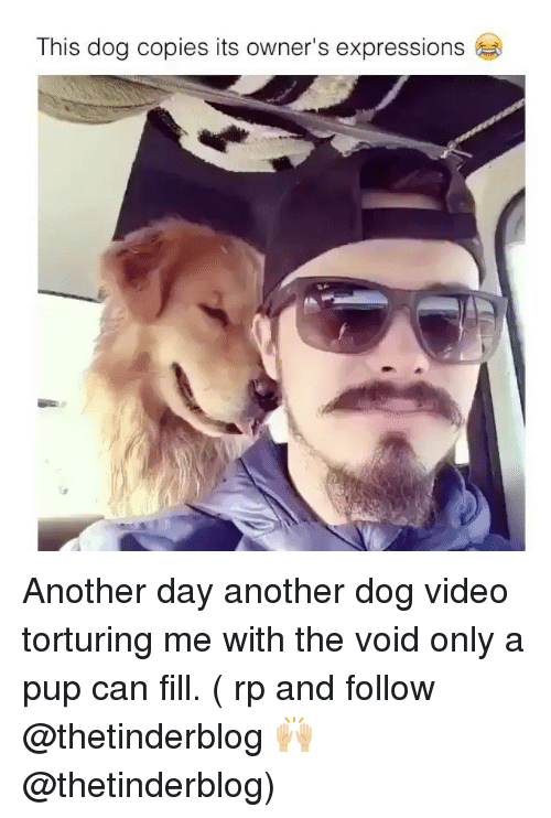 dog videos: This dog copies its owner's expressions Another day another dog video torturing me with the void only a pup can fill. ( rp and follow @thetinderblog 🙌🏼 @thetinderblog)