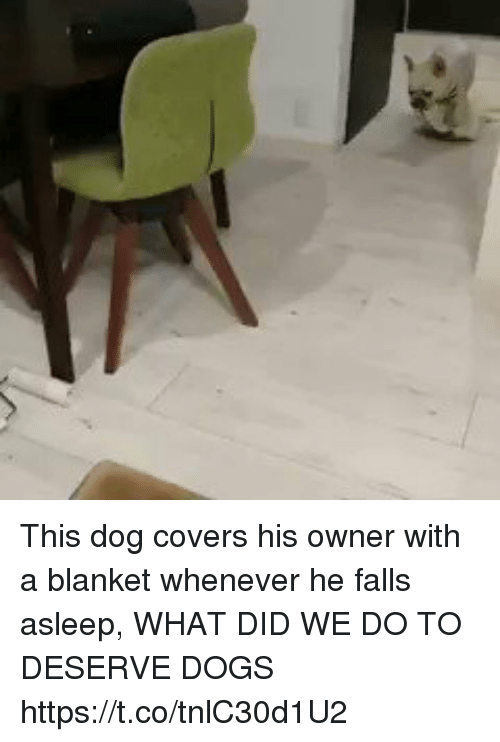 Dogs, Covers, and Girl Memes: This dog covers his owner with a blanket whenever he falls asleep, WHAT DID WE DO TO DESERVE DOGS https://t.co/tnlC30d1U2