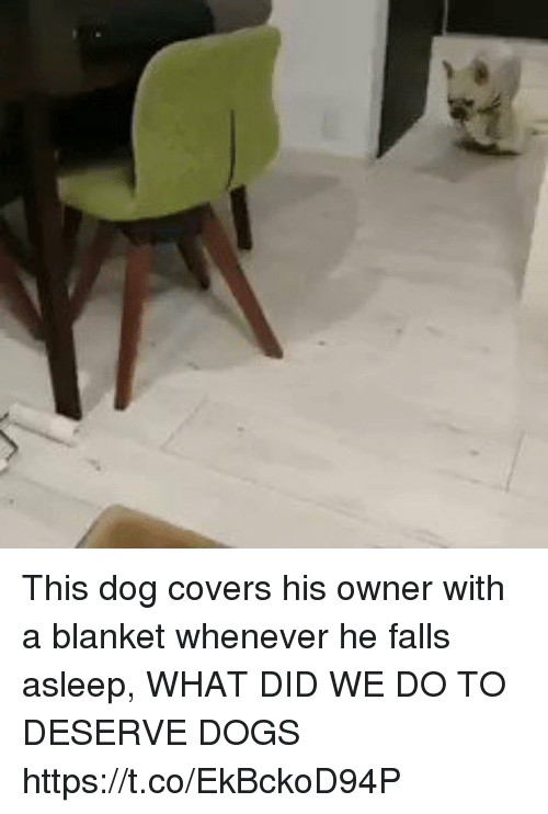 Dogs, Funny, and Covers: This dog covers his owner with a blanket whenever he falls asleep, WHAT DID WE DO TO DESERVE DOGS https://t.co/EkBckoD94P