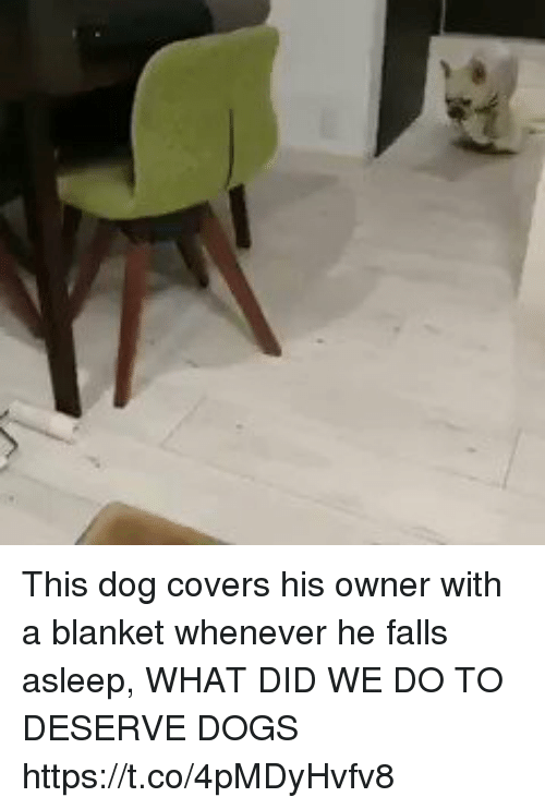 Dogs, Covers, and Girl Memes: This dog covers his owner with a blanket whenever he falls asleep, WHAT DID WE DO TO DESERVE DOGS https://t.co/4pMDyHvfv8