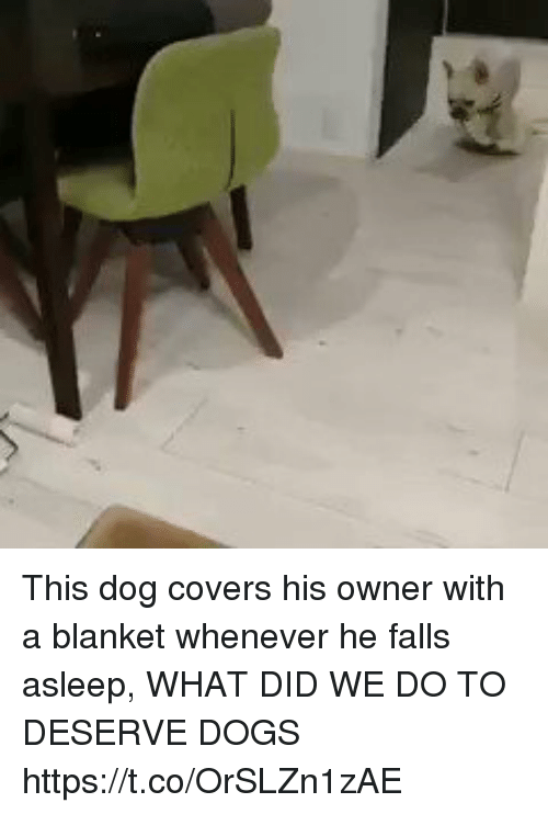 Dogs, Memes, and Covers: This dog covers his owner with a blanket whenever he falls asleep, WHAT DID WE DO TO DESERVE DOGS https://t.co/OrSLZn1zAE