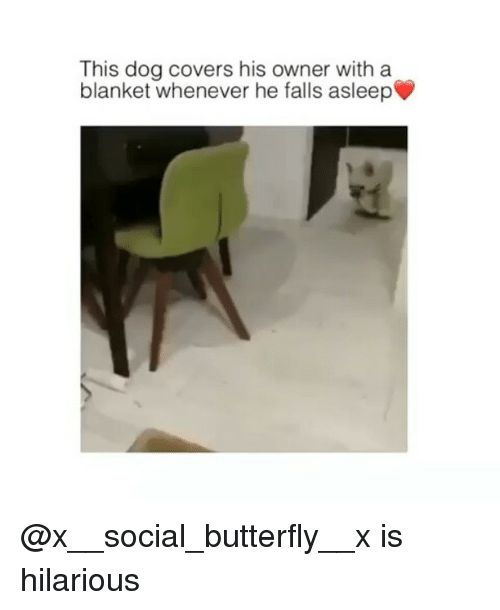Funny, Butterfly, and Covers: This dog covers his owner with a  blanket whenever he falls asleep▼ @x__social_butterfly__x is hilarious