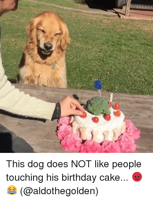 Birthday, Dogs, and Memes: This dog does NOT like people touching his birthday cake... 😡😂 (@aldothegolden)