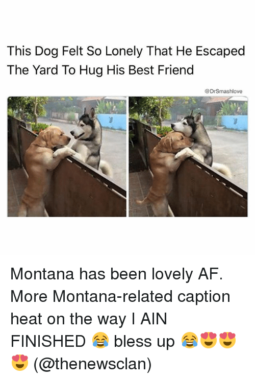 Af, Best Friend, and Bless Up: This Dog Felt So Lonely That He Escaped  The Yard To Hug His Best Friend  @DrSmashlove Montana has been lovely AF. More Montana-related caption heat on the way I AIN FINISHED 😂 bless up 😂😍😍😍 (@thenewsclan)