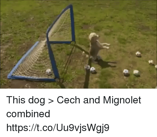 cech: This dog > Cech and Mignolet combined https://t.co/Uu9vjsWgj9