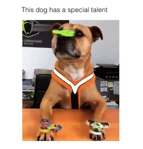 lto: This dog has a special talent  FABRICATIONS  PTY LTO