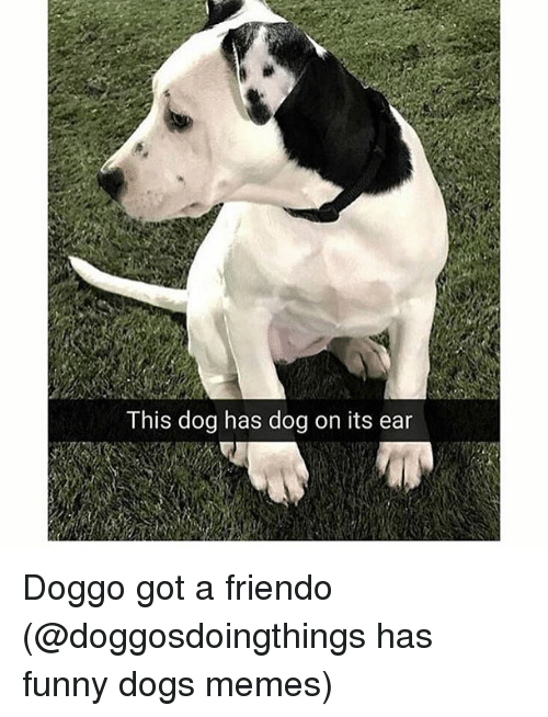 earings: This dog has dog on its ear Doggo got a friendo (@doggosdoingthings has funny dogs memes)