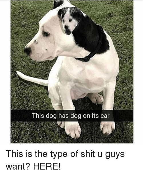 earings: This dog has dog on its ear This is the type of shit u guys want? HERE!