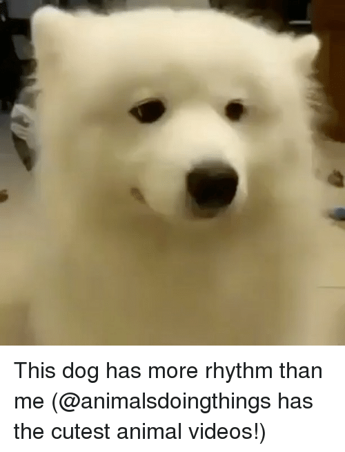 Videos, Animal, and Girl Memes: This dog has more rhythm than me (@animalsdoingthings has the cutest animal videos!)