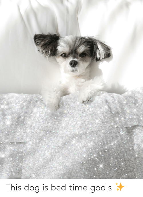 bed time: This dog is bed time goals ✨