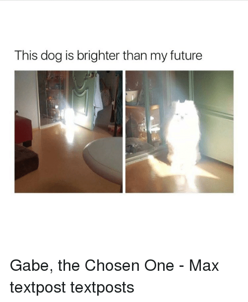 Gabe: This dog is brighter than my future Gabe, the Chosen One - Max textpost textposts