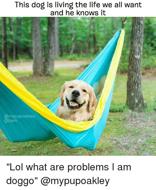 """Living The Life: This dog is living the life we all want  and he knows it  @mypupoakley  @bark """"Lol what are problems I am doggo"""" @mypupoakley"""