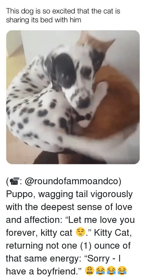 "Energy, Love, and Memes: This dog is so excited that the cat is  sharing its bed with him (📹: @roundofammoandco) Puppo, wagging tail vigorously with the deepest sense of love and affection: ""Let me love you forever, kitty cat 🤤."" Kitty Cat, returning not one (1) ounce of that same energy: ""Sorry - I have a boyfriend."" 😩😂😂😂"