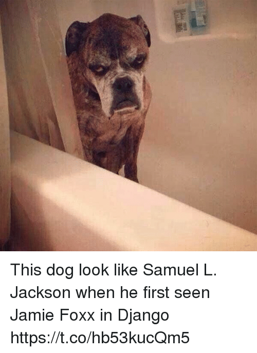 Django, Funny, and Jamie Foxx: This dog look like Samuel L. Jackson when he first seen Jamie Foxx in Django https://t.co/hb53kucQm5