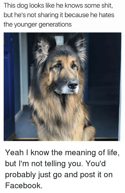 Facebook, Funny, and Life: This dog looks like he knows some shit,  but he's not sharing it because he hates  the younger generations Yeah I know the meaning of life, but I'm not telling you. You'd probably just go and post it on Facebook.