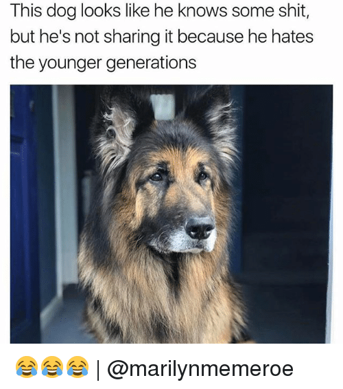 Not Sharing: This dog looks like he knows some shit,  but he's not sharing it because he hates  the younger generations 😂😂😂 | @marilynmemeroe