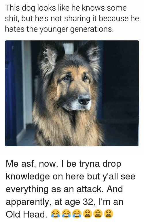 Not Sharing: This dog looks like he knows some  shit, but he's not sharing it because he  hates the younger generations. Me asf, now. I be tryna drop knowledge on here but y'all see everything as an attack. And apparently, at age 32, I'm an Old Head. 😂😂😂😩😩😩