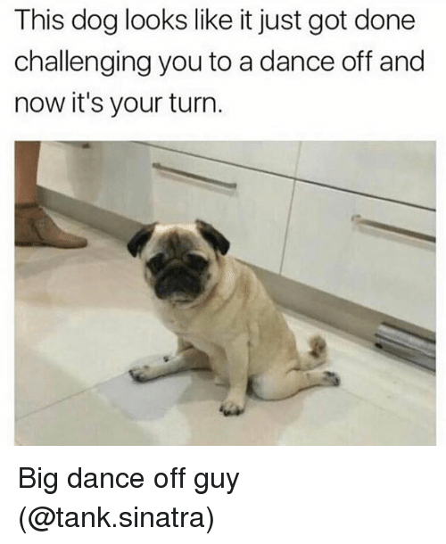 Girl Memes, Dance, and Got: This dog looks like it just got done  challenging you to a dance off and  now it's your turn Big dance off guy (@tank.sinatra)