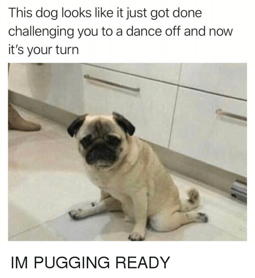 dance off: This dog looks like it just got done  challenging you to a dance off and now  it's your turn IM PUGGING READY