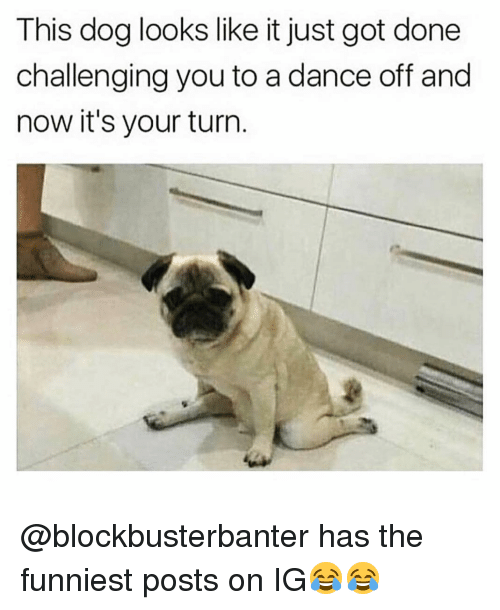 dance off: This dog looks like it just got done  challenging you to a dance off and  now it's your turn @blockbusterbanter has the funniest posts on IG😂😂