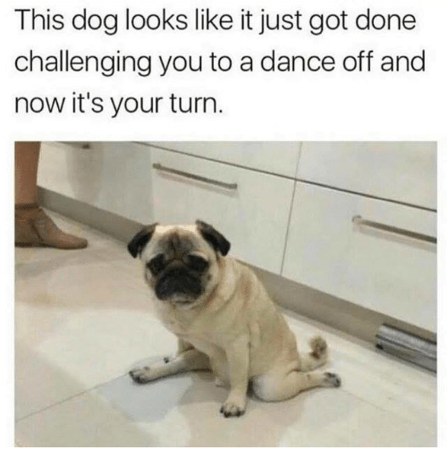 dance off: This dog looks like it just got done  challenging you to a dance off and  now it's your turn