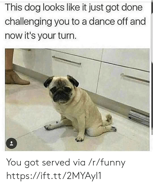 dance off: This dog looks like it just got done  challenging you to a dance off and  now it's your turn You got served via /r/funny https://ift.tt/2MYAyI1