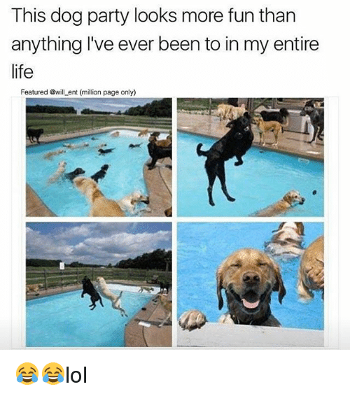 Life, Memes, and Party: This dog party looks more fun than  anything I've ever been to in my entire  life  Featured @will _ent (million page only) 😂😂lol