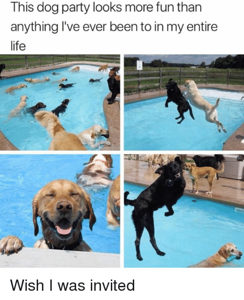 Life, Memes, and Party: This dog party looks more fun than  anything I've ever been to in my entire  life Wish I was invited