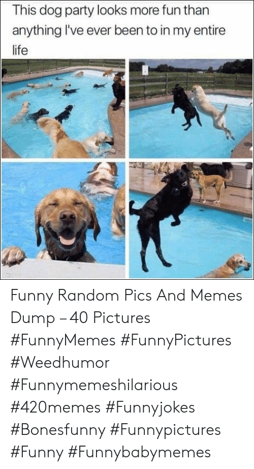 funny random: This dog party looks more fun than  anything I've ever been to in my entire  life Funny Random Pics And Memes Dump – 40 Pictures #FunnyMemes #FunnyPictures #Weedhumor #Funnymemeshilarious #420memes #Funnyjokes #Bonesfunny #Funnypictures #Funny #Funnybabymemes