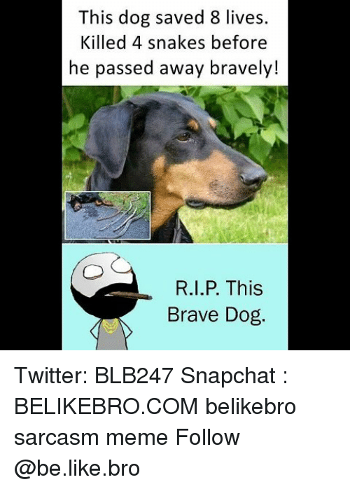 Braves: This dog saved 8 lives.  Killed 4 snakes before  he passed away bravely!  R.I.P. This  Brave Dog Twitter: BLB247 Snapchat : BELIKEBRO.COM belikebro sarcasm meme Follow @be.like.bro