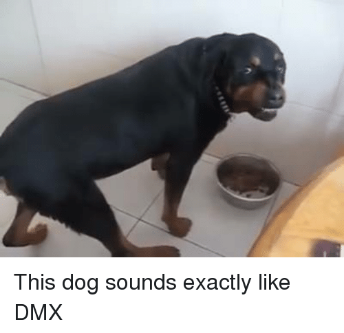 dmx memes and this dog sounds exactly like dmx