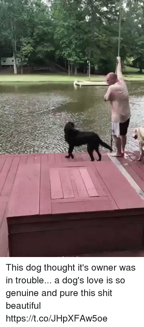 Beautiful, Dogs, and Funny: This dog thought it's owner was in trouble... a dog's love is so genuine and pure this shit beautiful  https://t.co/JHpXFAw5oe