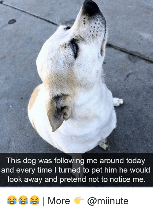 looking away: This dog was following me around today  and every time I turned to pet him he would  look away and pretend not to notice me. 😂😂😂   More 👉 @miinute