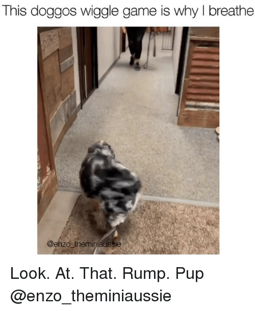 wiggle: This doggos wiggle game is why I breathe  @enzo theminiaussie Look. At. That. Rump. Pup @enzo_theminiaussie