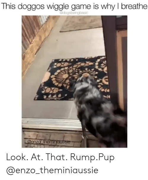 wiggle: This doggos wiggle game is why I breathe  Odogsbeingbasic  fale  44  @enza themintaussie Look. At. That. Rump.Pup @enzo_theminiaussie