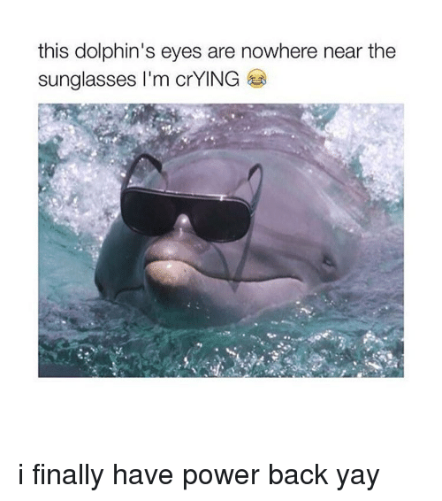 Dolphin: this dolphin's eyes are nowhere near the  sunglasses I'm crYING i finally have power back yay