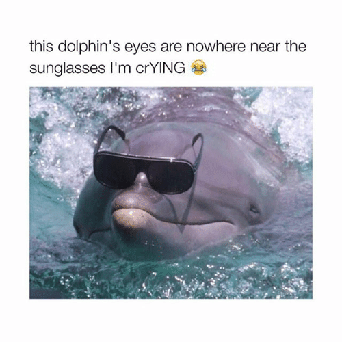 Crying, Memes, and Dolphins: this dolphin's eyes are nowhere near the  sunglasses I'm crYING