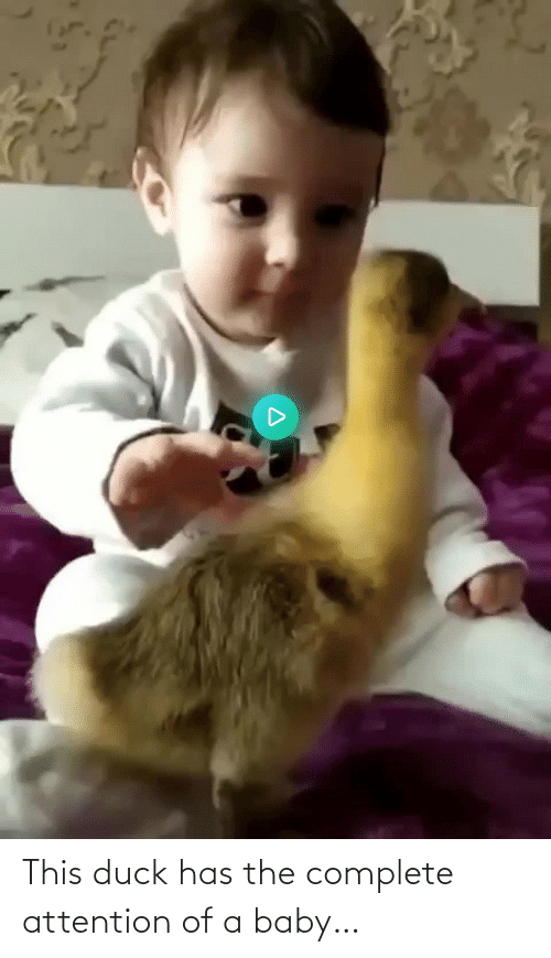 attention: This duck has the complete attention of a baby…