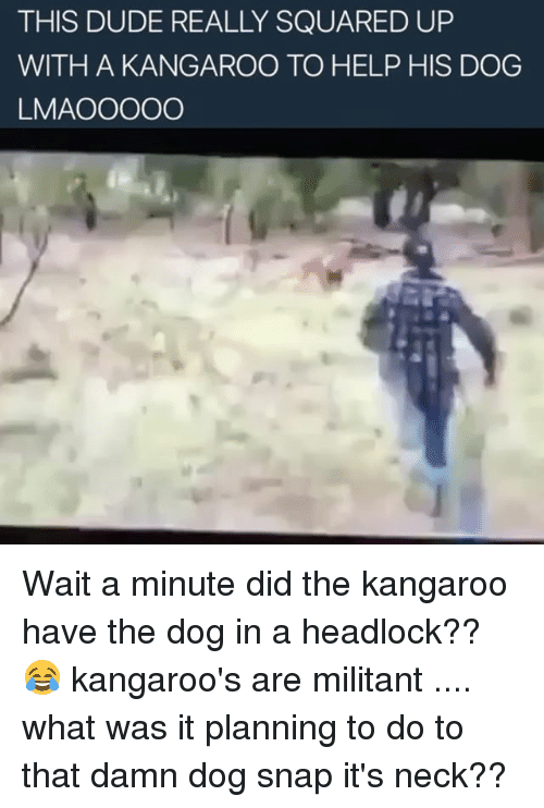 Memes, Square Up, and Square: THIS DUDE REALLY SQUARED UP  WITH A KANGAROO TO HELP HIS DOG  LMA OOOOO Wait a minute did the kangaroo have the dog in a headlock?? 😂 kangaroo's are militant .... what was it planning to do to that damn dog snap it's neck??